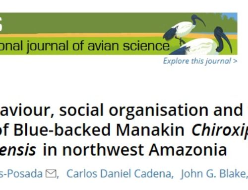 Documenting display behavior of blue-backed manakins